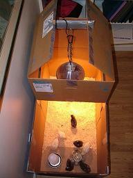 Cardboard Box Brooder