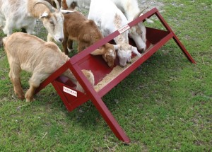 Tarter Farm & Ranch Equipment Goat Feeder