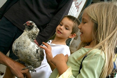 Children and Chicken